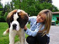 Residencia Canina y Felina Kantarriketas