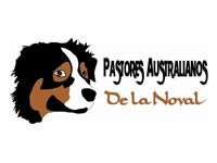 Pastores Australianos de la Noval